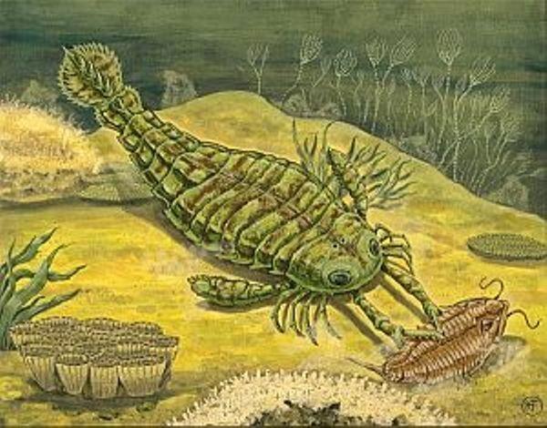 Sea spider  arthropod class Pycnogonida  Britannicacom