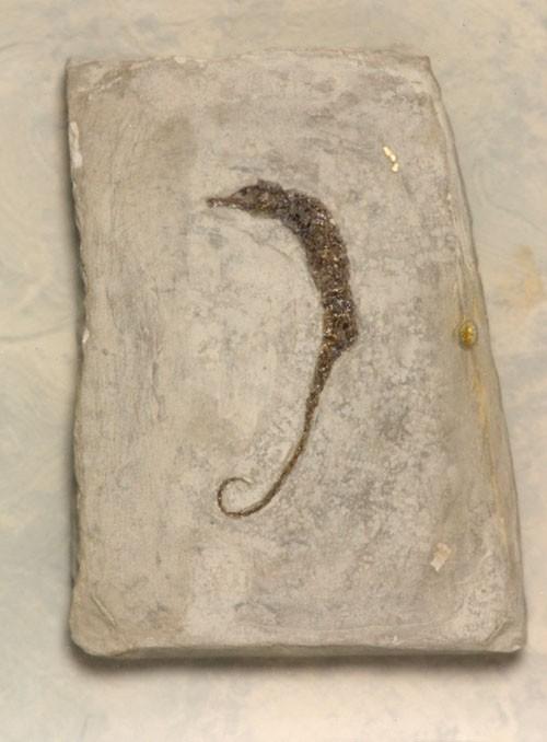 Recently Sold Fossils Sea Horse 1 Hippocampus Ramulosus
