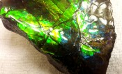 Ammolite Ammonite Partial 7