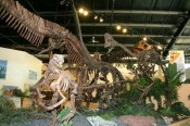 ROCKY MOUNTAIN DINOSAUR RESOURCE CENTRE