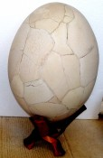 Elephant Bird Egg 1