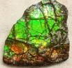 Ammolite Ammonite Partial 4