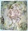 Bird Fossil 3