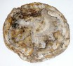Madagascar Petrified Wood2